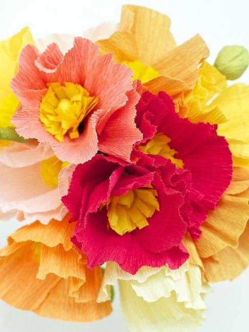 Красивые разноцветные цветы