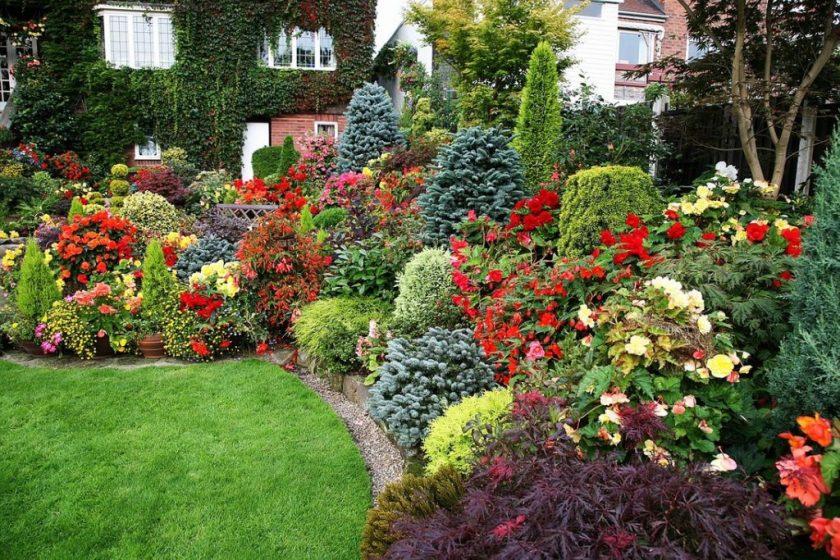 Разновидность цветов для дачи