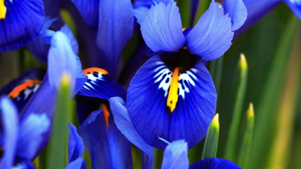 Существуют самых необычных цветов