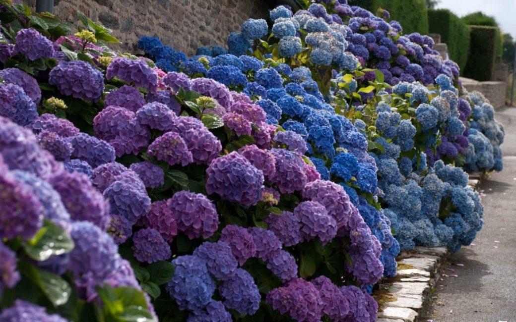 Невероятно необычное цветение этого растения