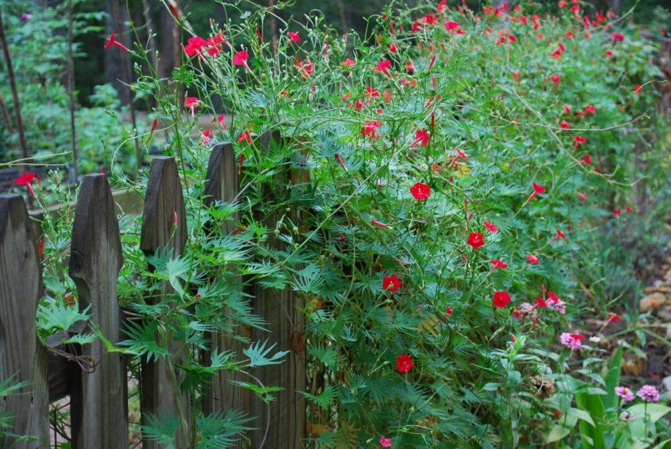Красивое растение с красными акцентами