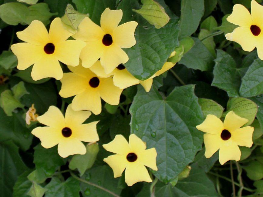 Интересные поистине наивные цветы