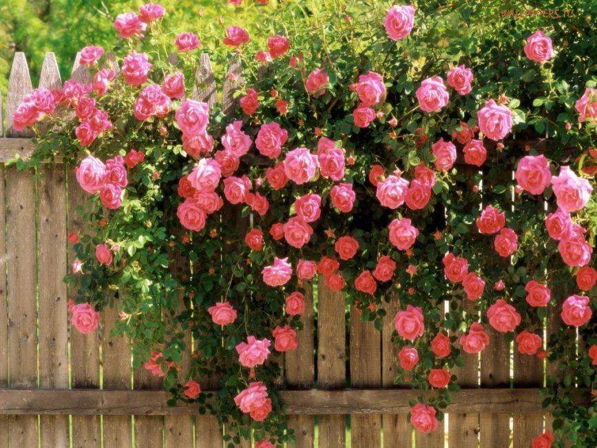 Растение будет обильно цвести только на свету