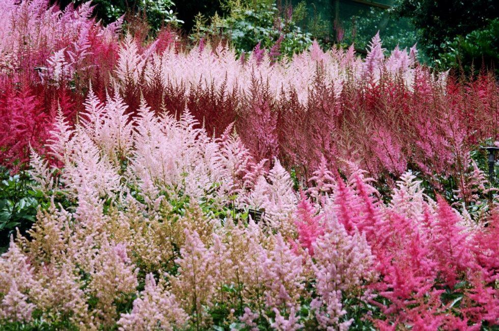 Монохромные цветочные композиции