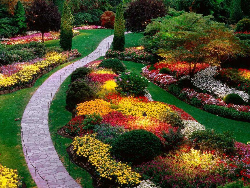 Контрастное сочетание цветов и оттенков на клумбе