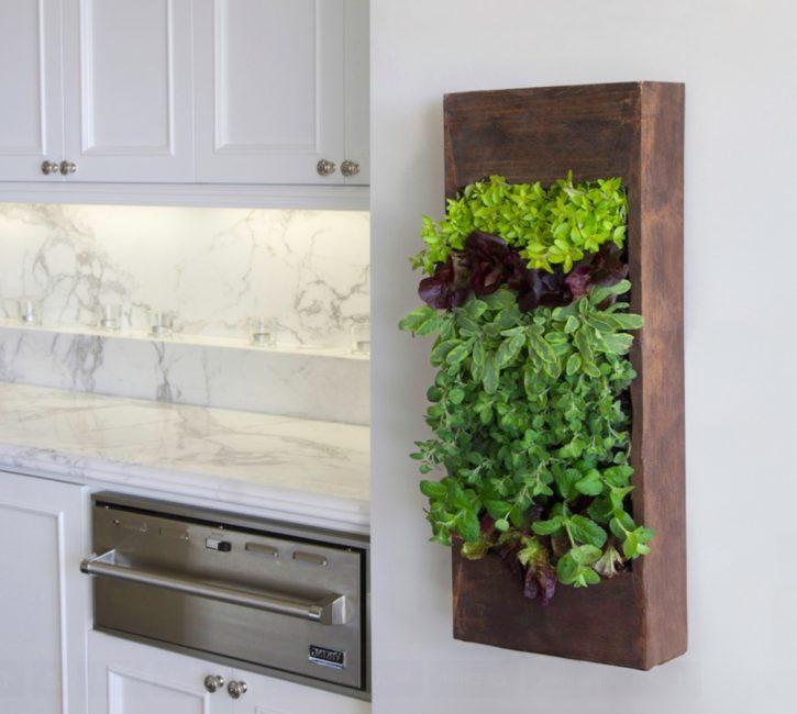 Растения на кухне способны украсить любой, даже самый скучный интерьер