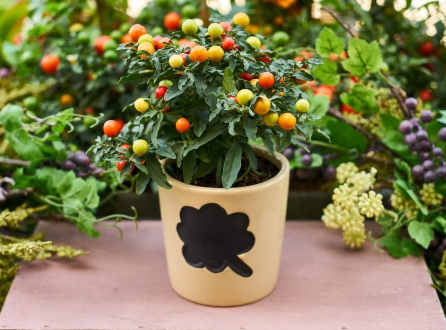 Растение со съедобными плодами