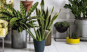 Уход за комнатными растениями в домашних условиях (175+ Фото). Выбираем удобрения и подкормку