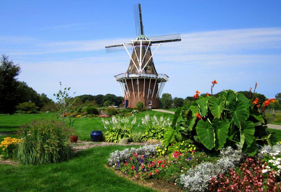 В голландском стиле широко используют контрастные яркие краски