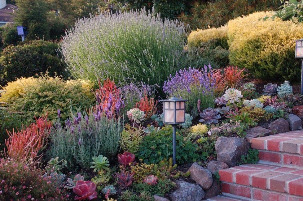 Оптимальные цветы для японского сада – пионы, хризантемы и рододендроны