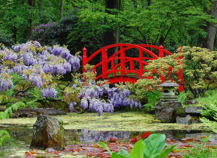 Цветки сакуры олицетворяют чистоту и стойкость