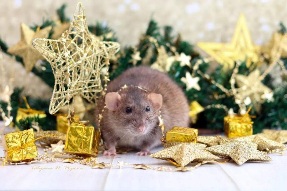 Позаботьтесь о том, чтобы на заставках монитора у всех красовался этот милый зверек в новогодней мишуре.