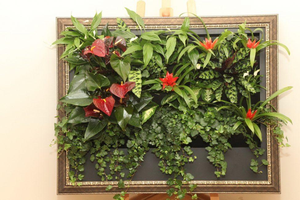Уход за комнатными растениями в домашних условиях (175+ Фото). Золотые правила экспертов