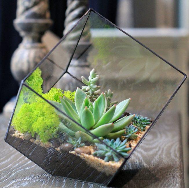 Миниатюрные медленно растущие комнатные растения