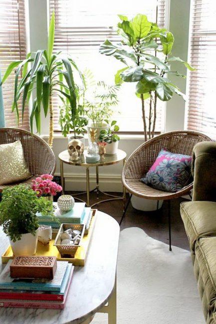Сочетание комнатных растений в интерьере