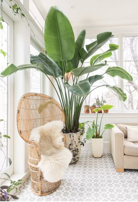 Растения в гостиной для более уютного семейного отдыха