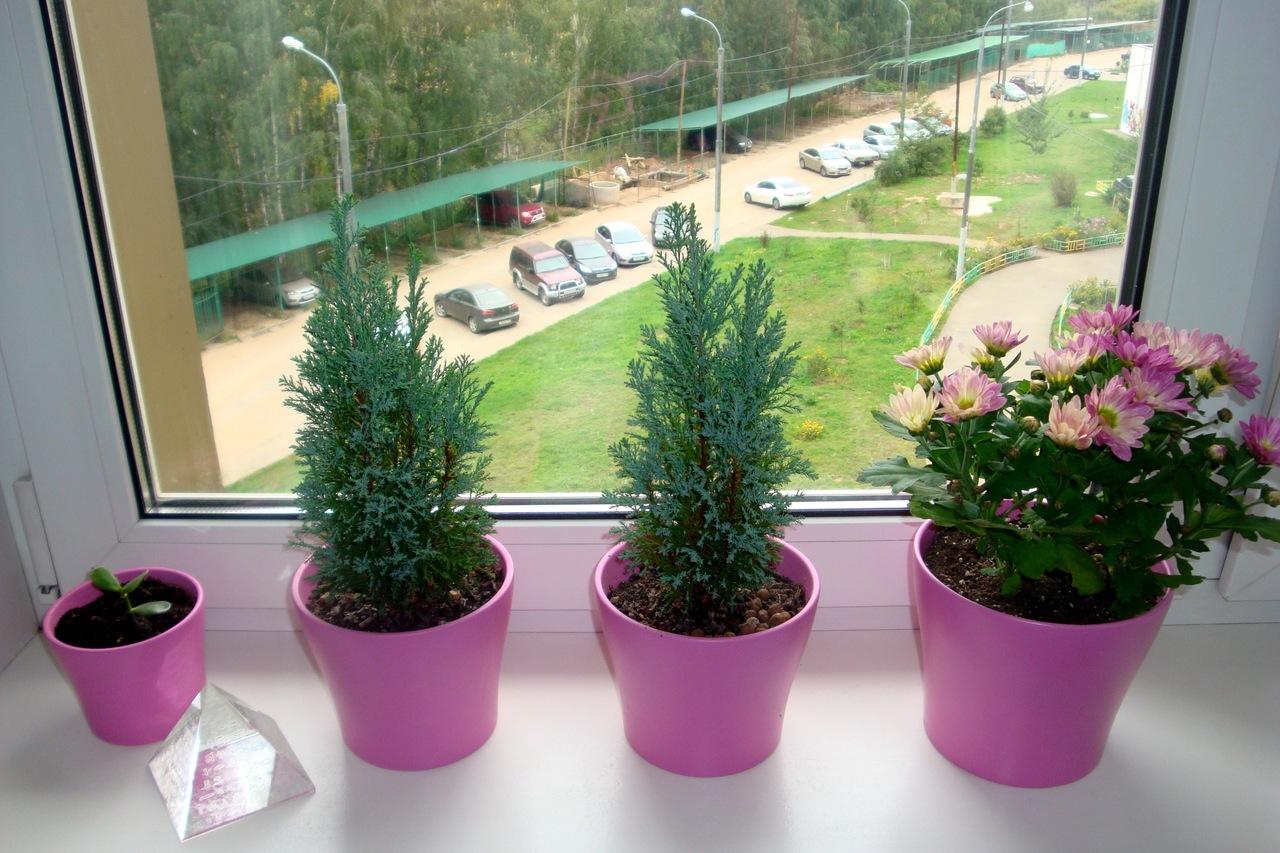 Полезные растения выращивание дома 52
