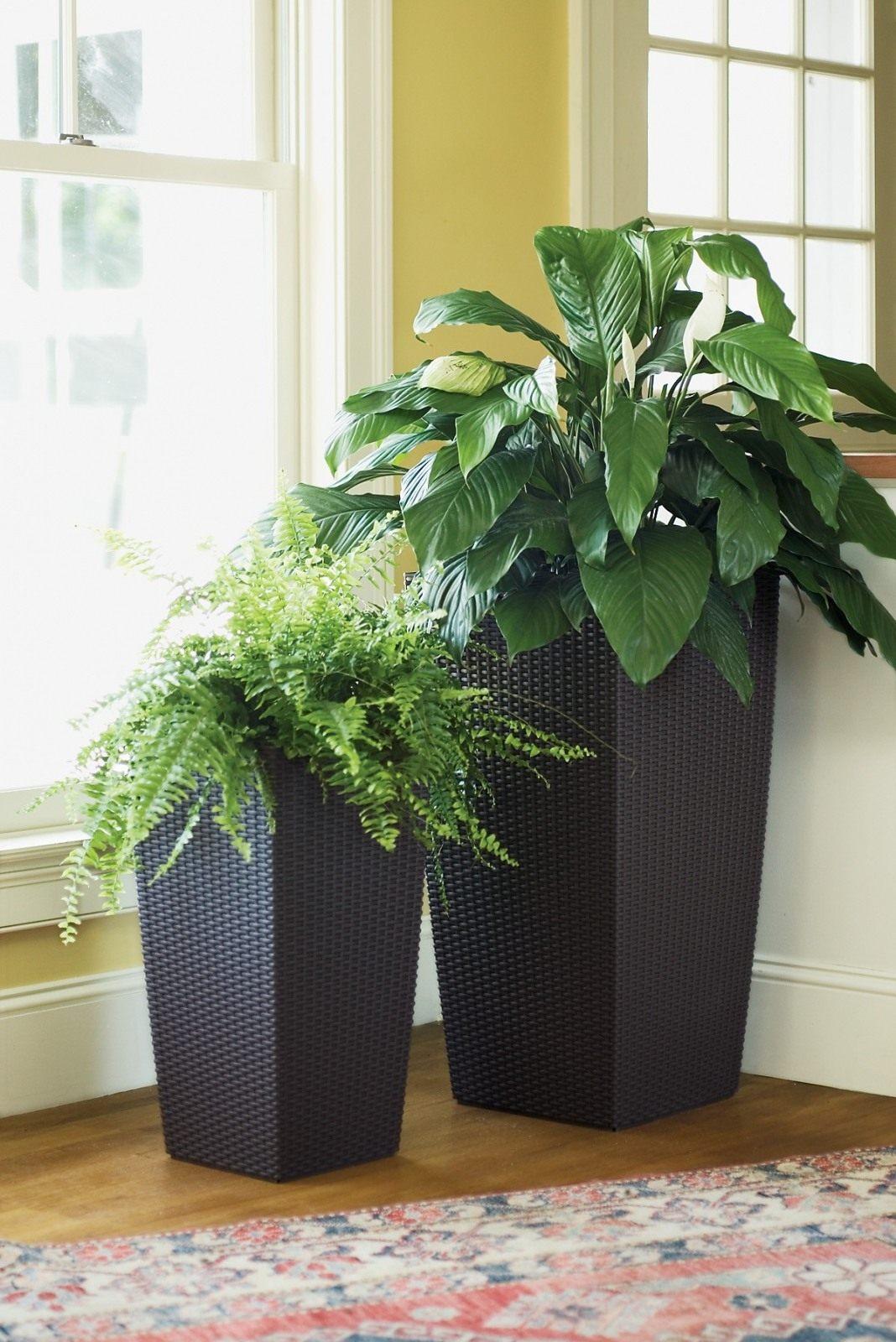 смотреть фото больших комнатных растений