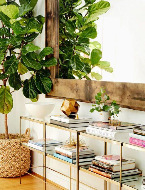 Комнатные растения напротив зеркал