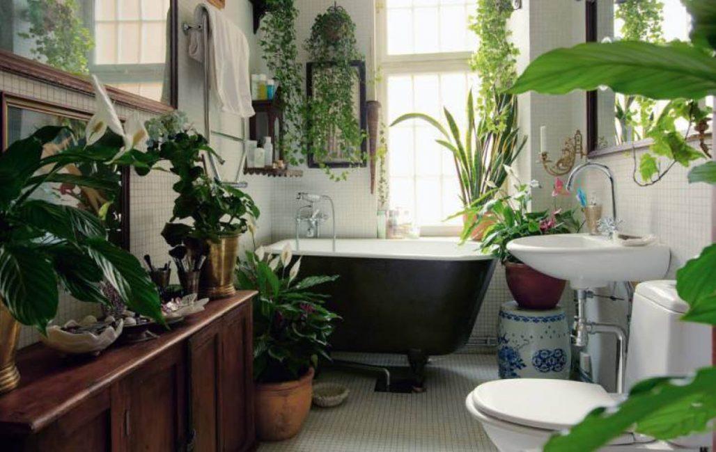 Спатифиллум, диффенбахия, плющ и другие растения в ванной