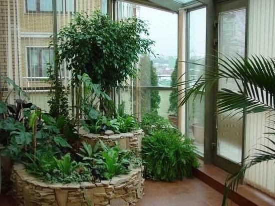 Геометрические линии при высаживании растений