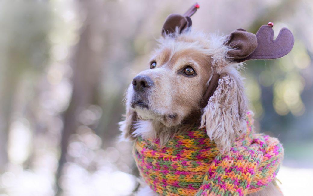 Добавляем ушки и шарфик - образ готов