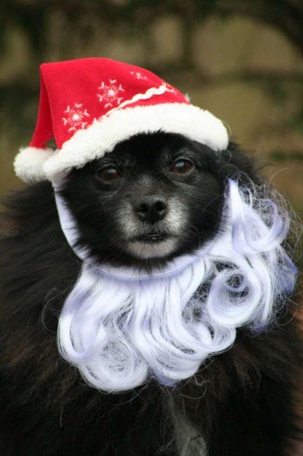 Свой личный Дед Мороз