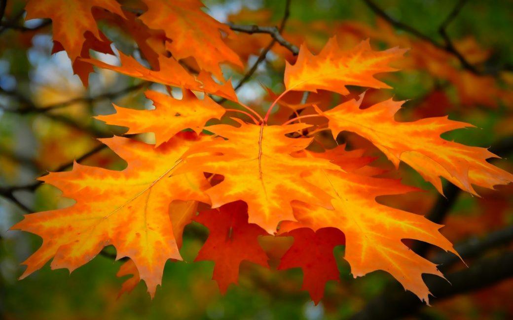 Большие, яркие и красочные листья для короны