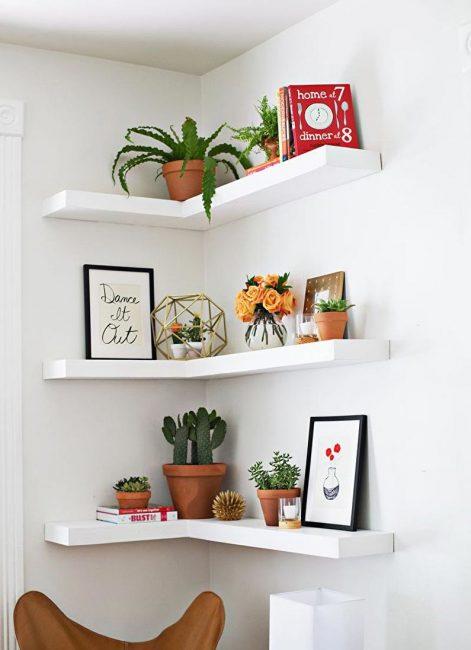 Прекрасное место для любых кактусов