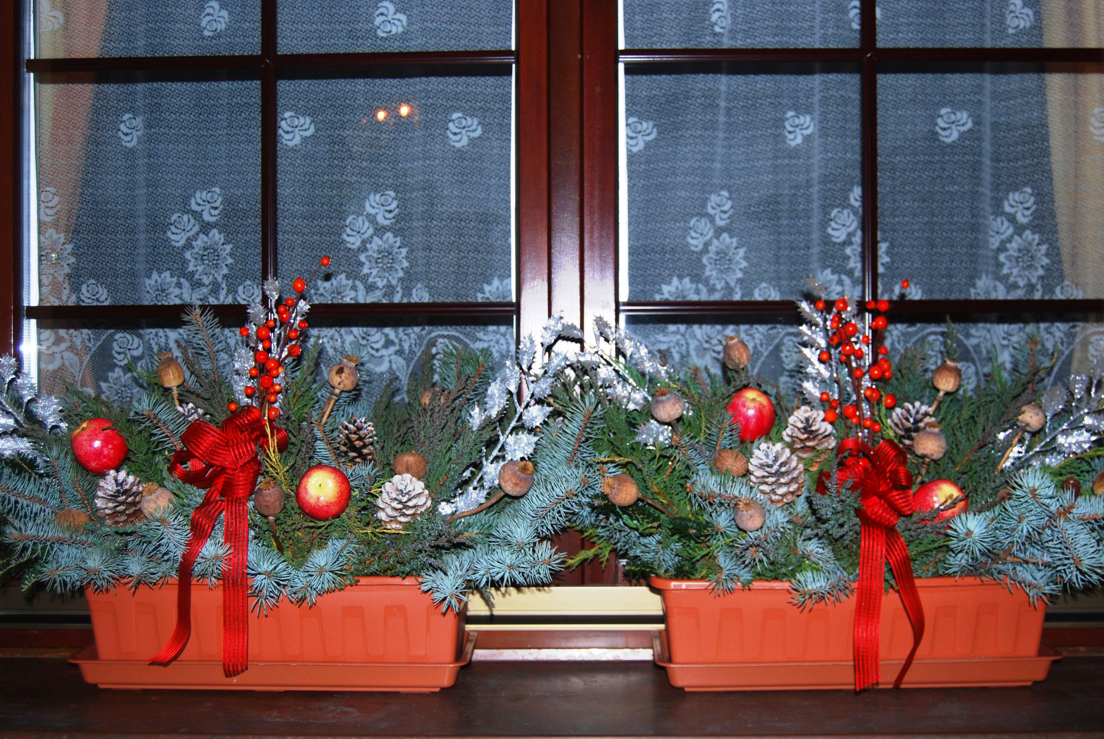 позволит будущем как украсить окно к новому году фото декоративноцветущая обладает свойством