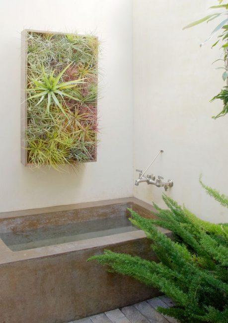 Используйте влаголюбивые растения в ванной комнате