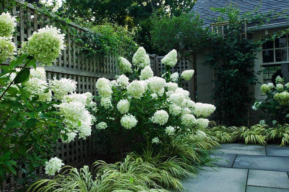 Зеленые и белые комбинации растений