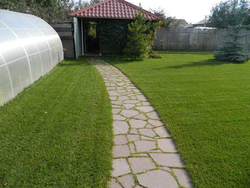 Трава между швов для поддержания влажности