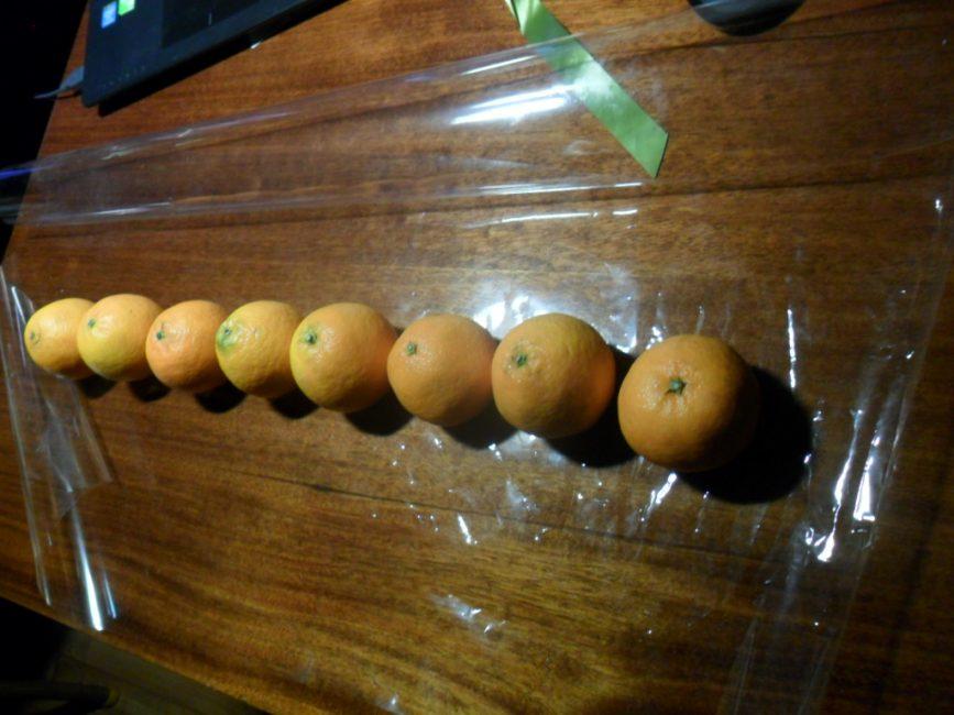 Выложите 8 мандарин по длине