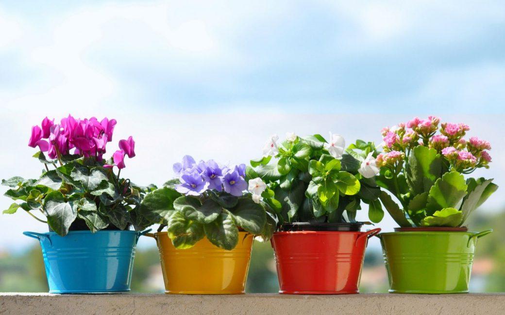 Каждое растение требовательно к условиям содержания