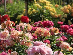 Оформление Цветников и Клумб своими руками - 210+ (Фото) Оригинальных и красивых дизайнов