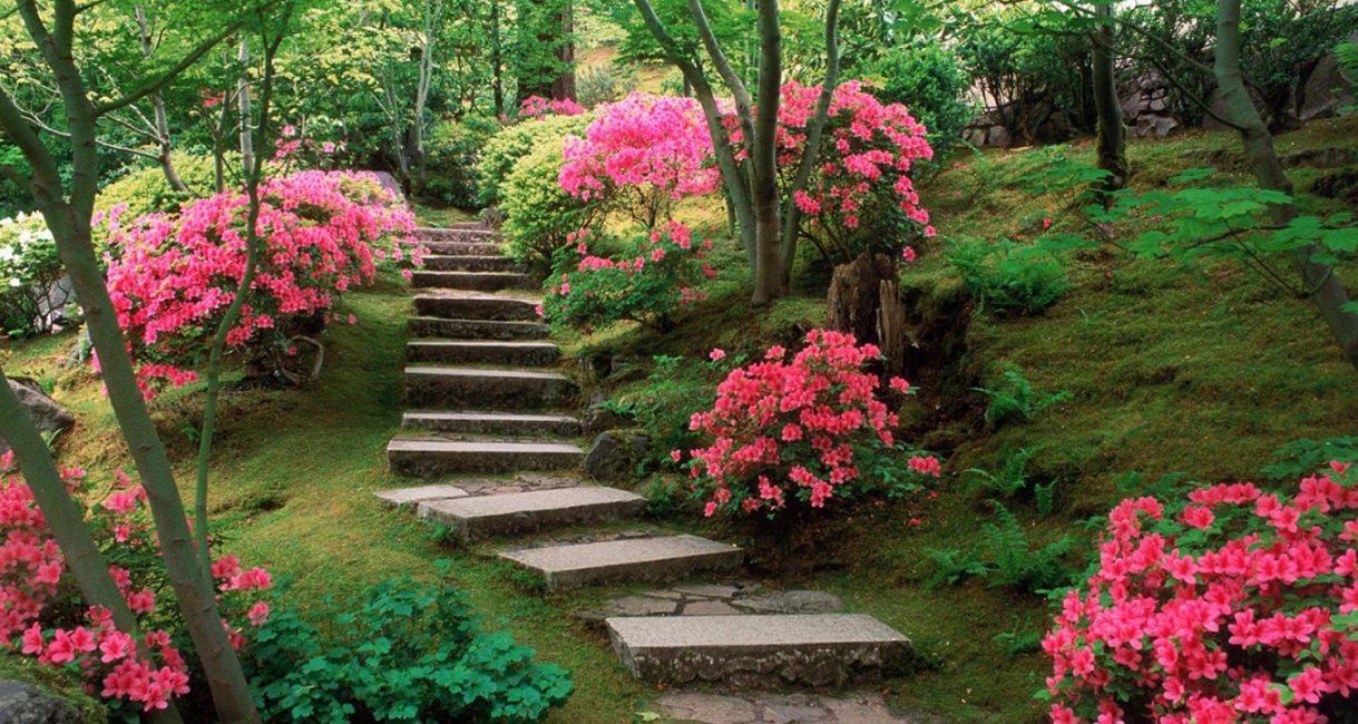 Лето - время цветения многих видов однолетних