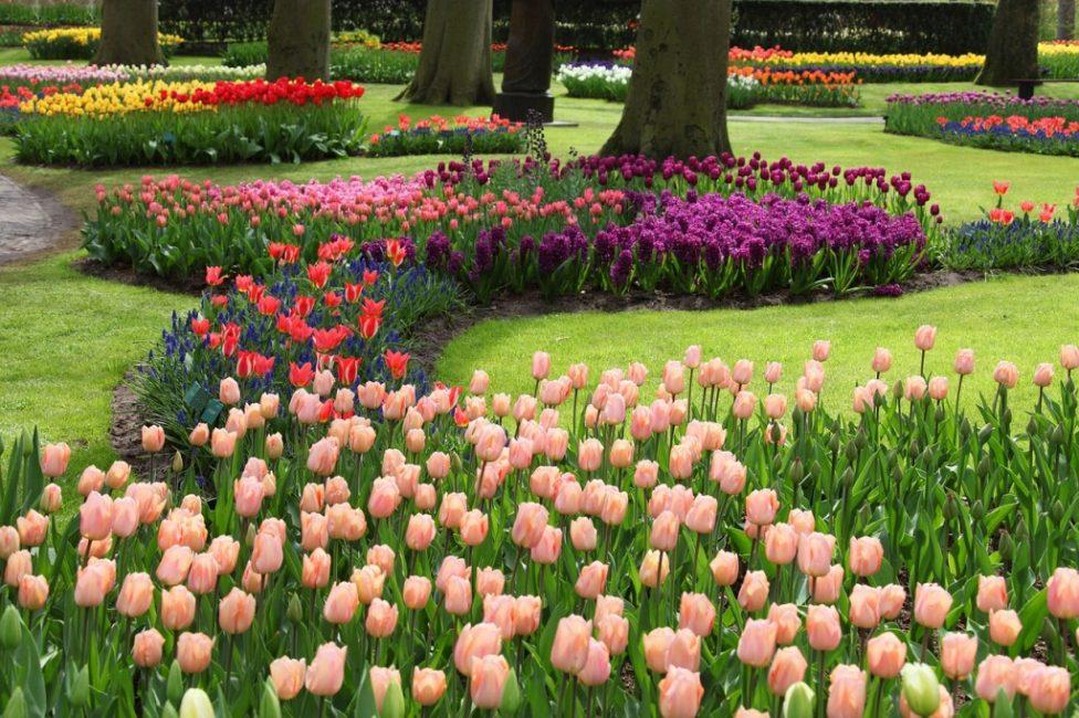 Вариант с тюльпанами