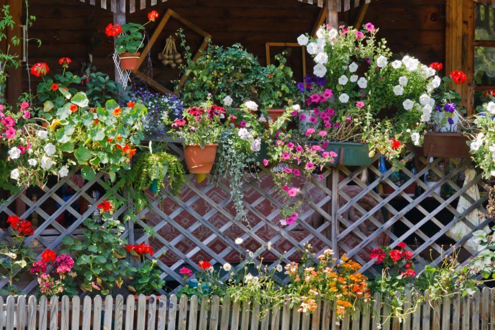 Красивая изгородь, украшенная цветами