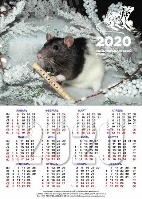 Календарик с крыской может украсить любую из ваших стен.