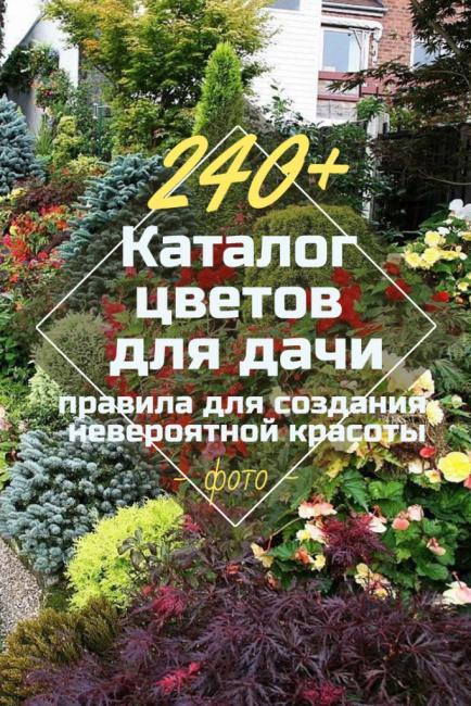 Каталог цветов для дачи