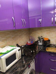 Женщина решилась на ремонт в кухне своими руками с очень маленьким бюджетом. Фото До/После