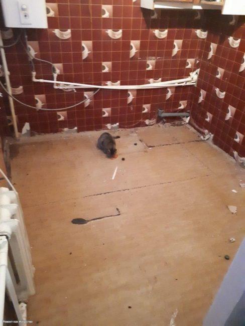 Первым делом парень вынес всю старую мебель, она больше не пригодится. Разве что, где-то на даче