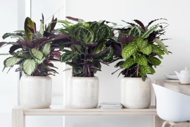 Мелодия комнатных растений и уход за ними в домашних условиях (175+ Фото). Золотые правила экспертов