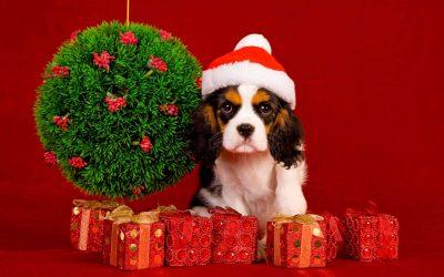 Новогодние игрушки своими руками на Новый 2018 год – Год Собаки (245+Фото)