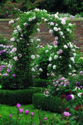 Каталог цветов для дачи (240+Фото с названиями): Все правила для создания невероятной красоты