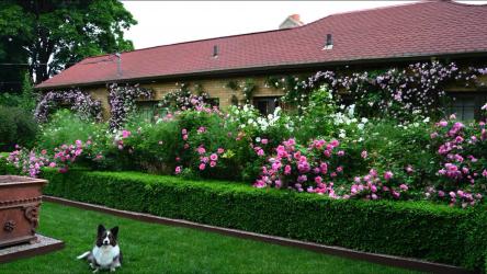 Живая изгородь на даче – своими руками: подбор растений, посадка и уход. Быстрорастущие, многолетние и вечнозеленые — какие лучше выбрать? (105+ Фото)